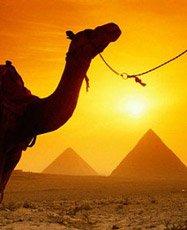 Солнечный Египет: шикарный отдых на море